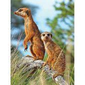 Kit ricamo diamante - Collection d'Art - Cuscino da ricamare suricati