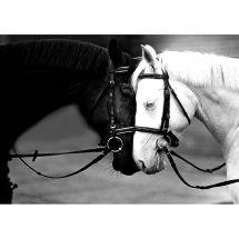 Kit ricamo diamante - Collection d'Art - Cavalli bianchi e neri