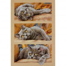 Kit Punto Croce - Dimensions - Max il gatto