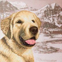 Kit Punto Croce - Nova Sloboda - Labrador