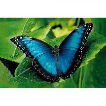 Kit ricamo diamante - Wizardi - Farfalla blu